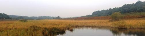 Hincheslea Bog