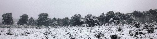 Snow near Wilverley